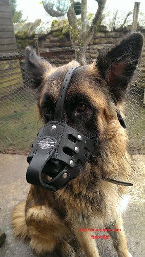 大型犬 無駄吠え防止マスク